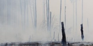 burned-down-forest-is-seen-near-the-settlement-of-berestyanki