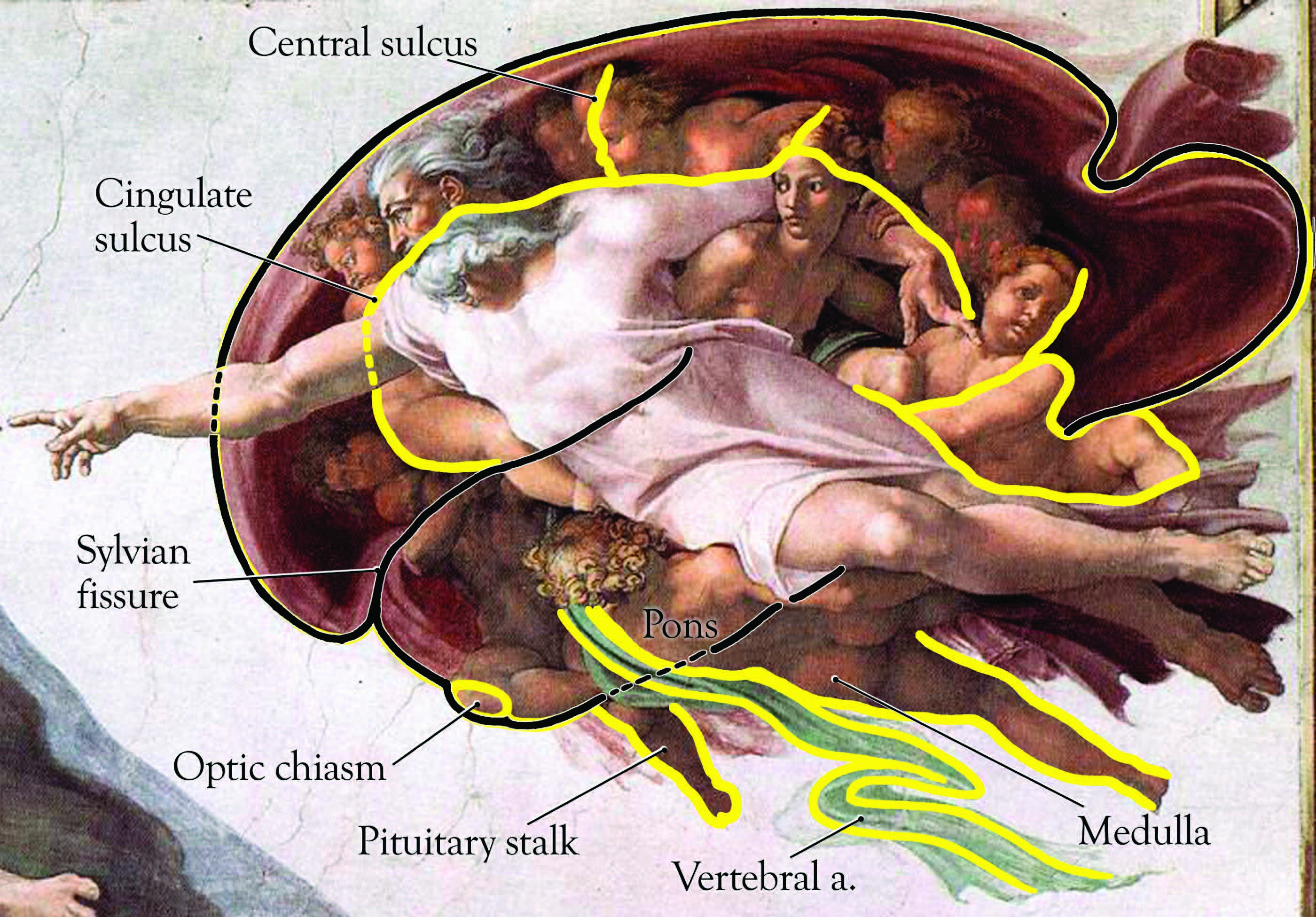 Michelangelo Hid Anatomy Lesson in the Sistine Chapel: Human ...