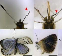 mutated-butterflies