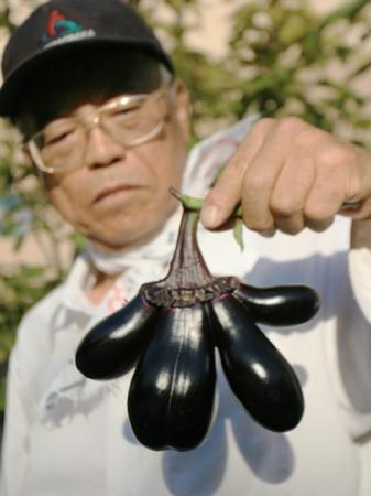 Eggplant Mutation In OSAKA