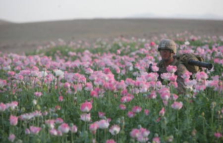 Photos of U.S. and Afghan Troops Patrolling Poppy Fields June 2012-03