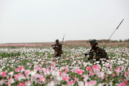Photos of U.S. and Afghan Troops Patrolling Poppy Fields June 2012-07