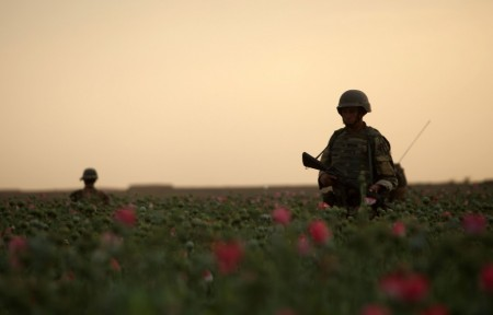 Photos of U.S. and Afghan Troops Patrolling Poppy Fields June 2012-10
