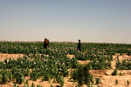 Photos of U.S. and Afghan Troops Patrolling Poppy Fields June 2012-16