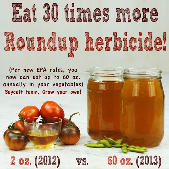 roundup--news-epa-rules