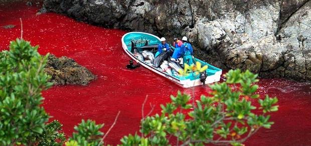 Taiji-The-Cove-Dolphins
