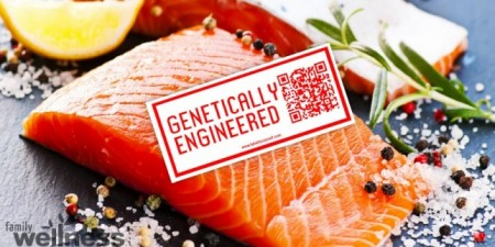 salmon-GMO