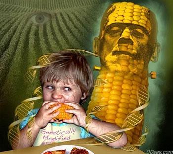 GMO-DNA