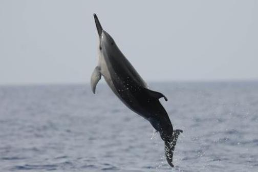 More-than-400-dead-dolphins-found-in-northern-Peru
