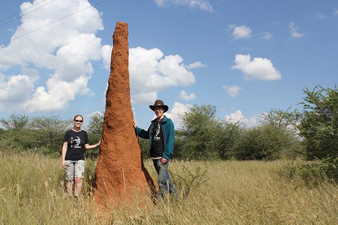 termits