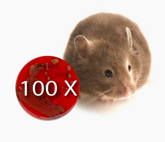 vaccine_flu_100_times_mice