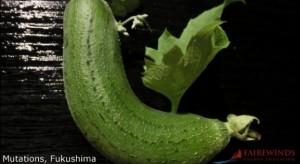 Fukushima-Mutation