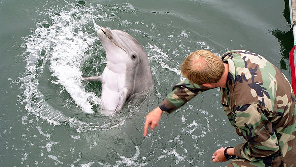 NATO Military Dolphins to Roam Black Sea