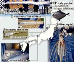 Japan-sea-creatures