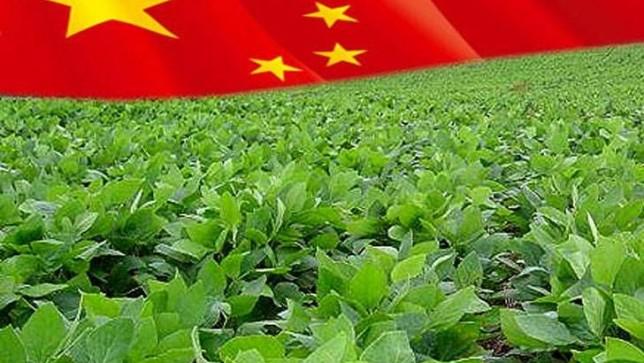 soja-china1