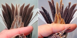 Emergency research underway in Japan after birds found with perplexing deformities