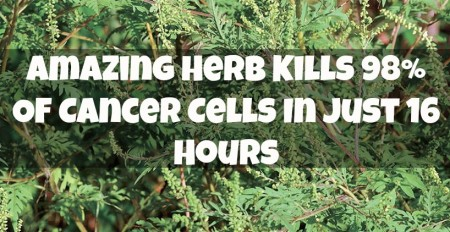 Artemisia-Annua-Amazing Herb Kills 98 Percent Of Cancer Cells In Just 16 Hours