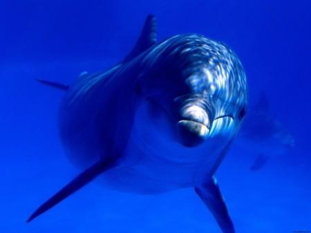 Dolphin123