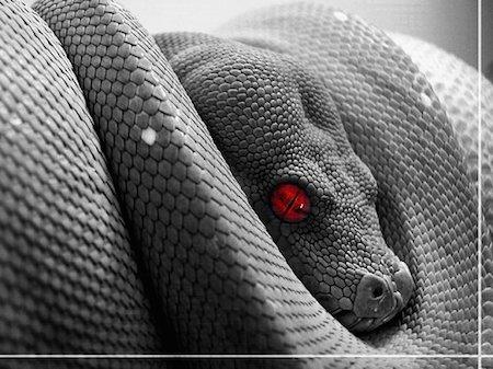 snake-slither-poison-evil