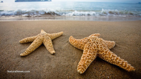 Starfish-Beach-Sand-Ocean