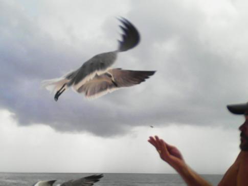 MA-FeedingBird