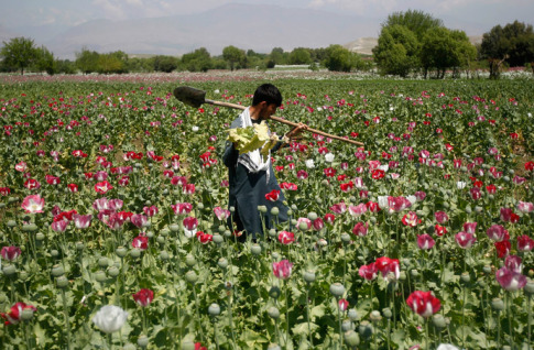 afghanistan-poppy-field-opium-heroin1