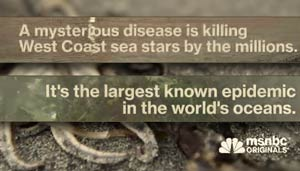 sea stars collapse