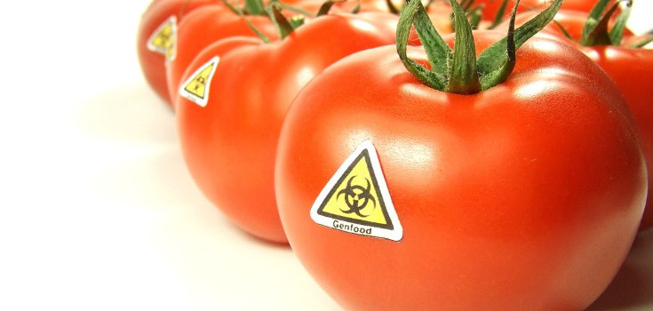 gmo_tomatoes_toxic