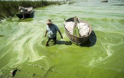 A fisherman wades in Chaohu Lake, covered in blue-green algae, in Chaohu city
