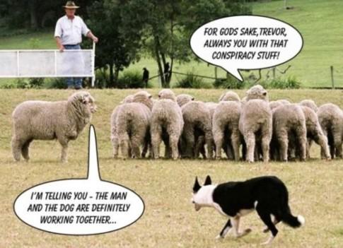 sheep-sheeple