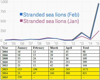 CA_sea-lions_strandings