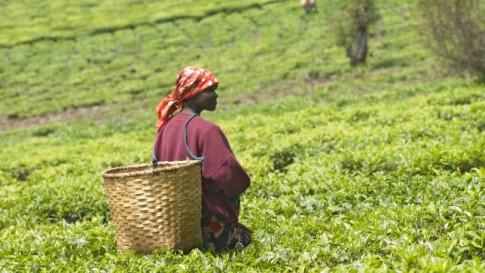 africa-agribusiness