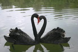 black swan two