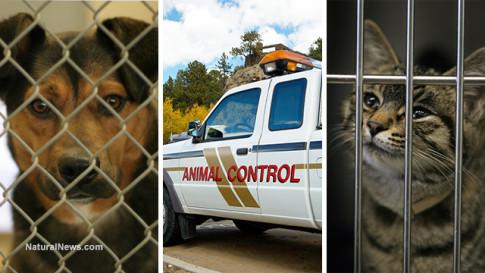 Animal-Control-Pets