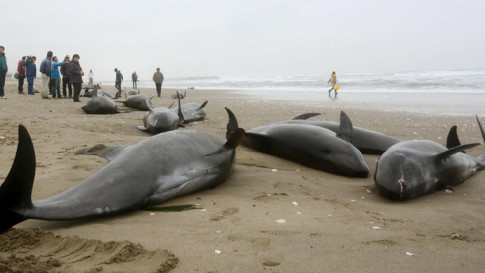 Mass Whale Beaching Re-Ignites Quake Fears Among Japanese