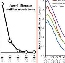 stock_biomass_2
