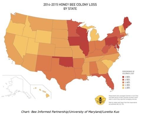 Bee-losses-map