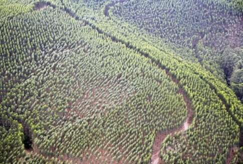 Ecuador smashes reforestation world record