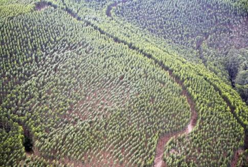 Ecuador smashes reforestation world record