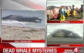 whale deaths-2