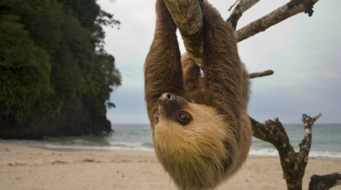 Costa Rica Is Shutting Down All Zoos And Freeing Every Animal In Captivity