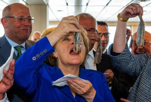 Merkel-fish