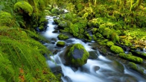 Fiddlehead-Fern-Westland-National-Park-New-Zealand
