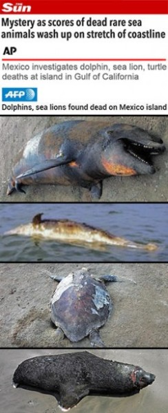 Mystery as scores of dead rare sea animals wash up
