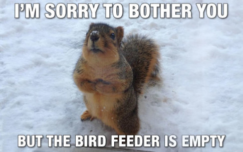 feed-the-squirrels