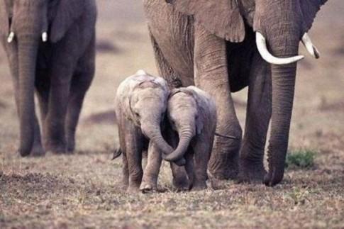 Holding trunks