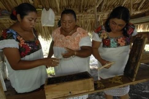bees-mayans