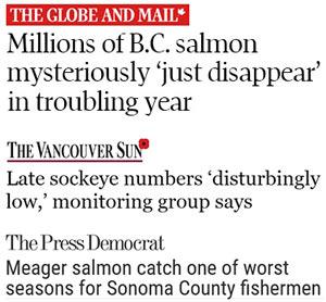 salmon_disappear
