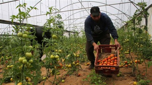 Israeli planes spray crop-killing chemicals on Gaza farms.jpg