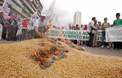 gmo-brazil-soybeans